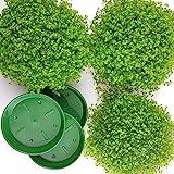 3 Bubikopf + mit 3 Untersetzer. A1 Qualität MPS kontrolliert Unsere Pflanzen sind bereits für Sie vorgedüngt