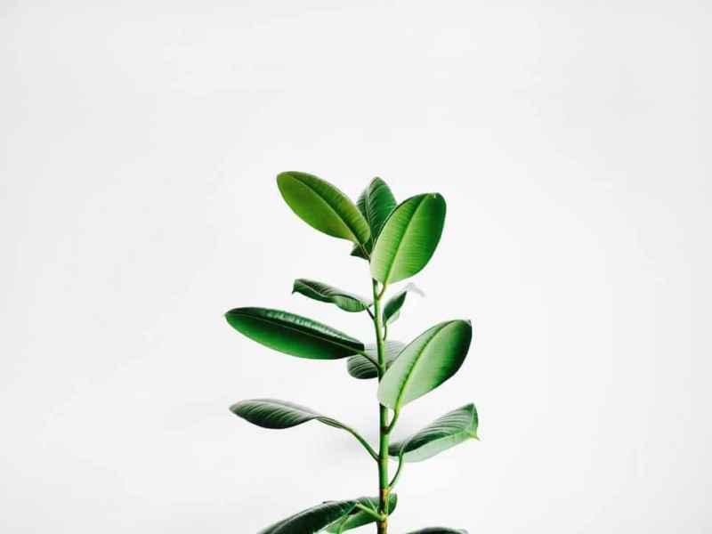 31 besten Zimmerpflanzen für wenig Licht