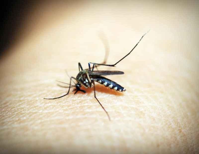Mücken vertreiben