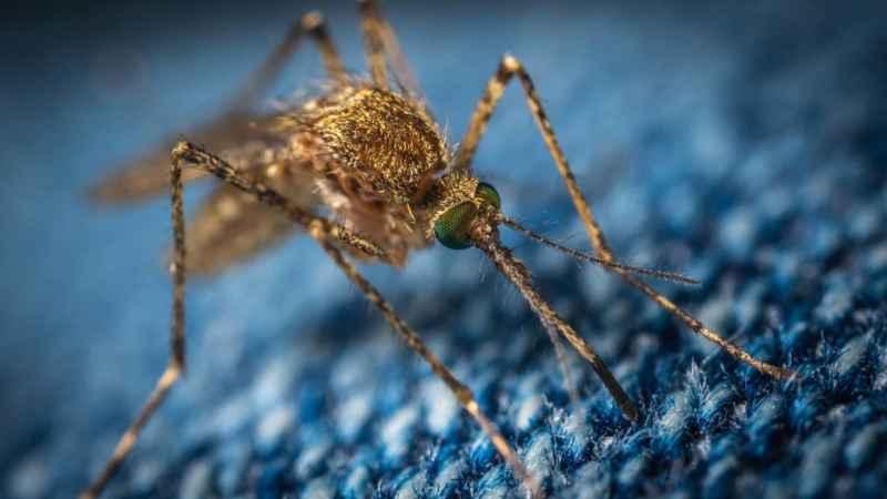 Mücken richtig vertreiben