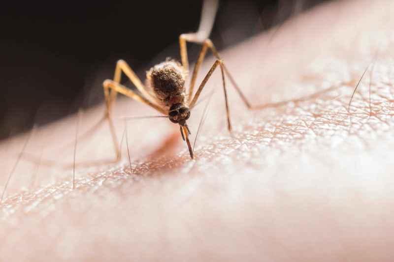 Mücken vertreiben Mythen