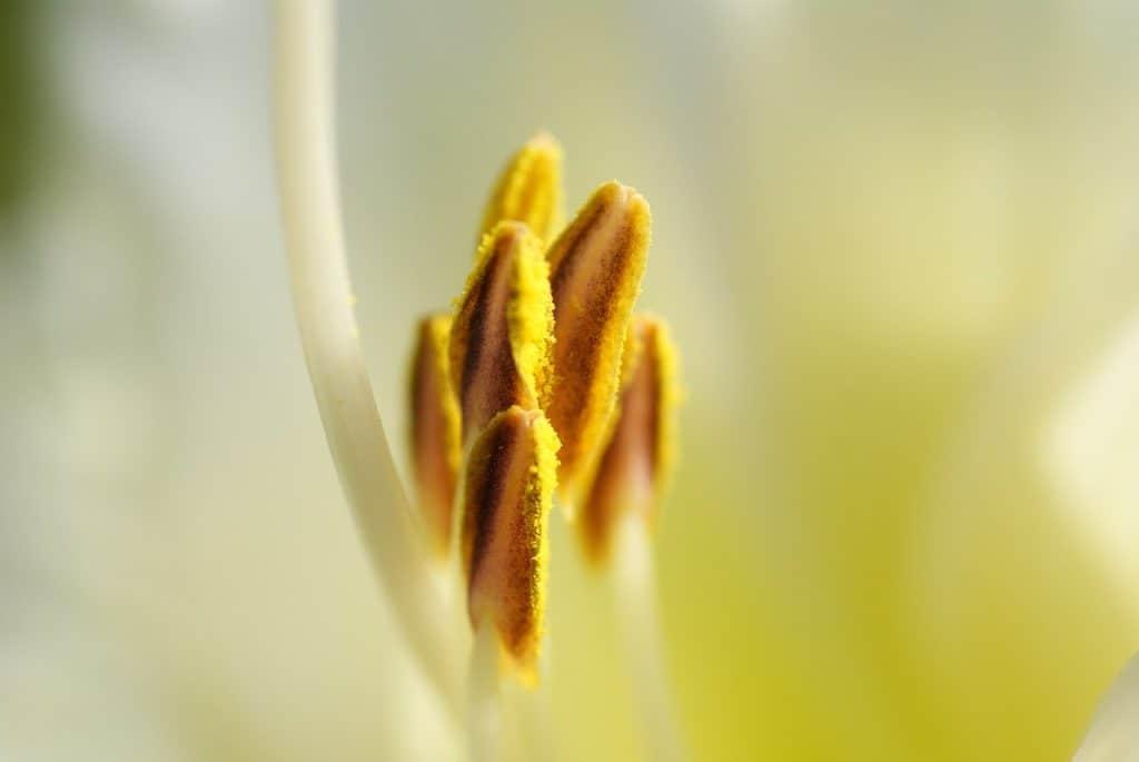 Blütenstaub Saison